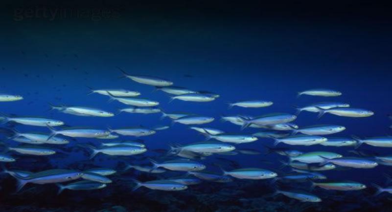 foto-pagina-pesca-sostenible
